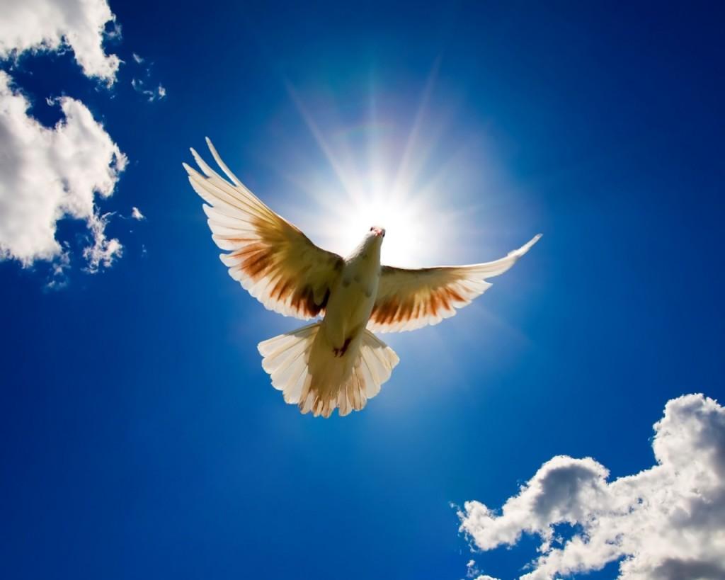 peace la case d anna